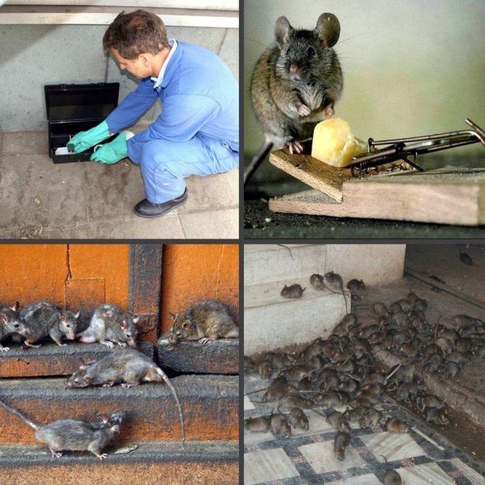 СЭС от грызунов в Москве