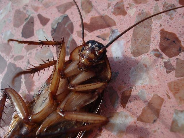 Качественное уничтожение тараканов в Красногорске. Цены