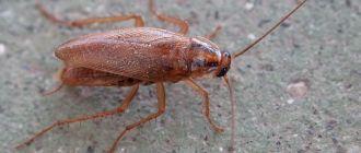 Уничтожение тараканов в Люберцах