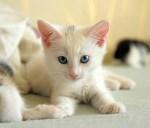 二人暮らし可、猫付きの賃貸登場?!