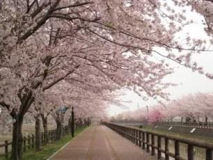 介紹外國人會開心收下的日本伴手禮