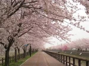 外國人會開心收下的日本伴手禮介紹