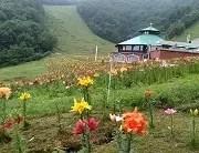 美麗的夏季景色  尾瀨之鄉片品村