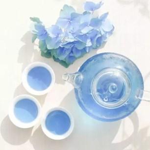 這是怎麼一回事?有如寶石般的夢幻「藍色綠茶」開賣囉!