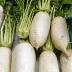 大阪の浪速伝統野菜「田辺大根」