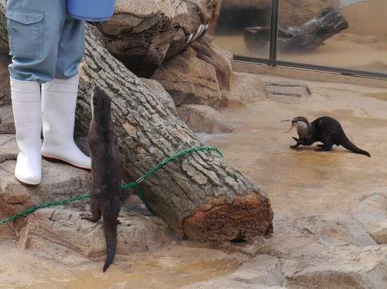 王子動物園 餌やりタイム
