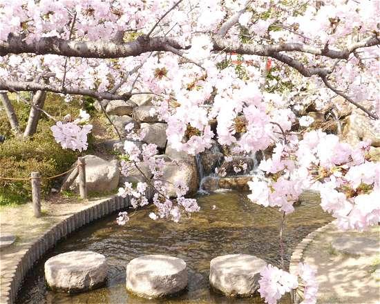 桜守公園 岡本