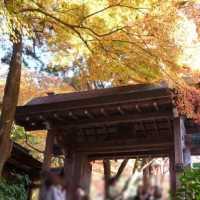 瑞宝寺公園 紅葉