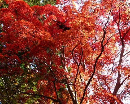 瑞宝寺公園 有馬温泉紅葉