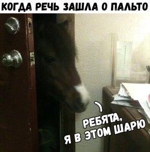 Я тут конь