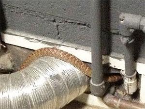 Почему нельзя убивать змей во дворе