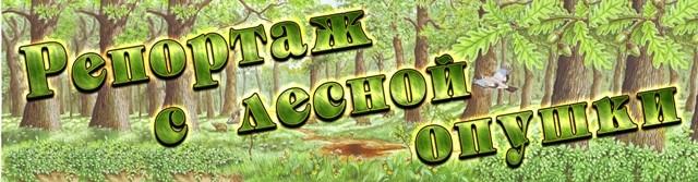 Заголовок книжной выставки о лесе, лесах
