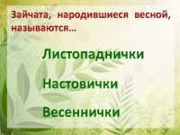 """Викторина по сказке Э. Шима """"Приключения зайца"""""""
