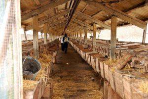 Crescente nutry in fattoria