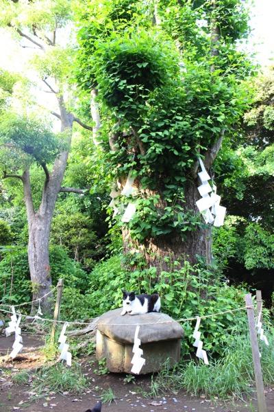 Enoshima 10