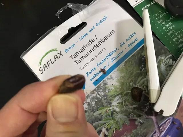 タマリンドの種を傷付けた所