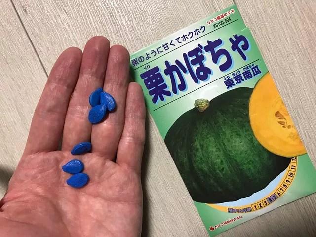青いかぼちゃの種