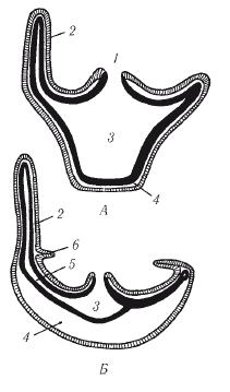 perché alcuni movimenti intestinali galleggiano e altri affondano?
