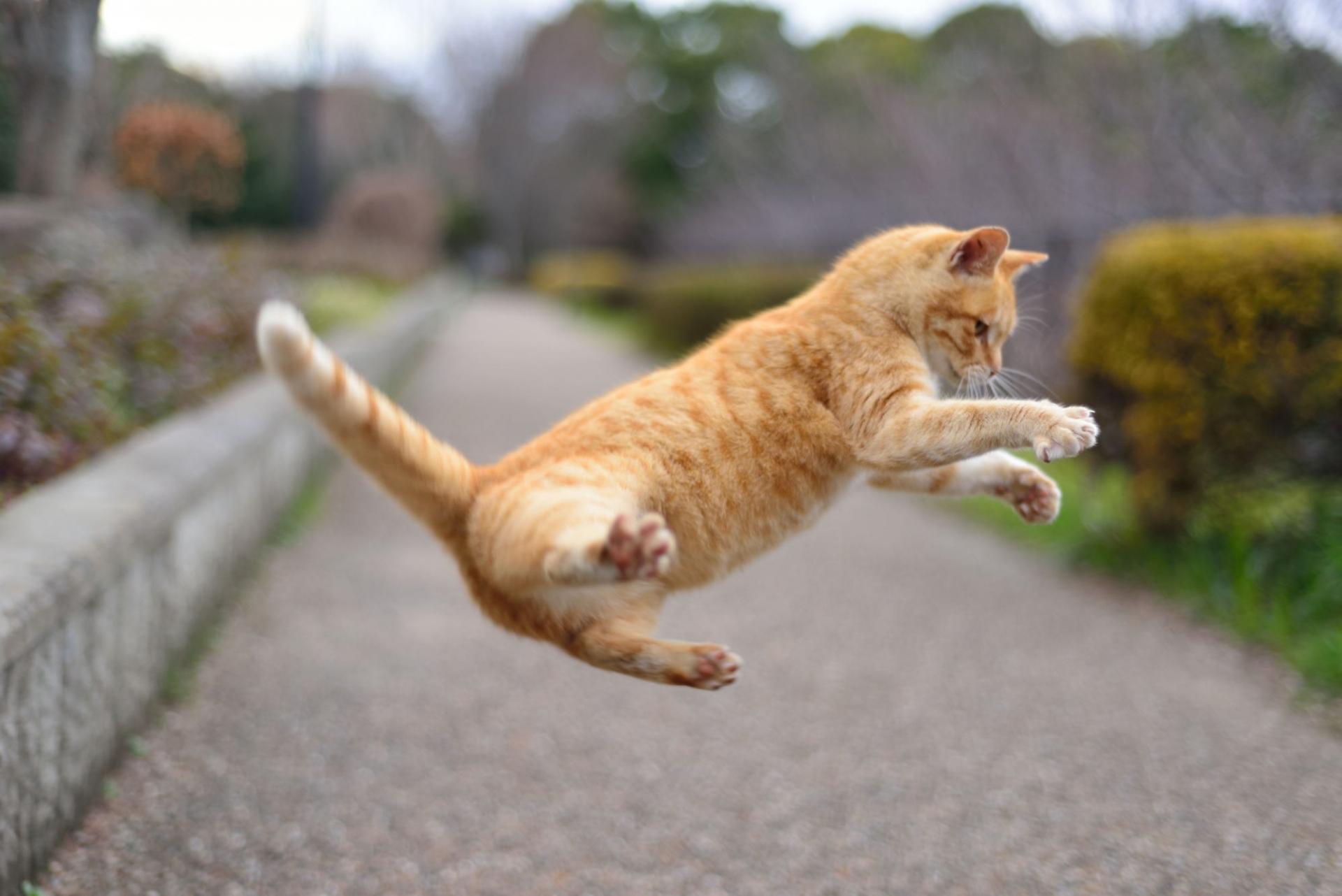 猫,骨折,自然治癒,対処