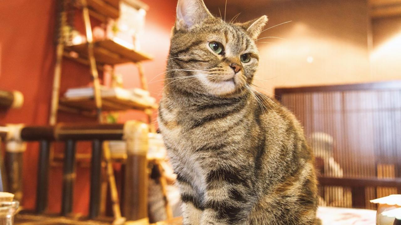 猫,感電,症状,対策