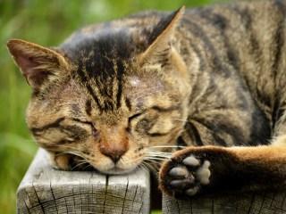 猫,怪我,消毒,イソジン