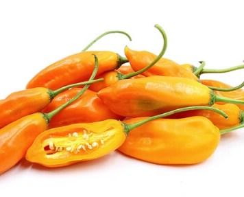 Aji Amarillo peruvian chili 3