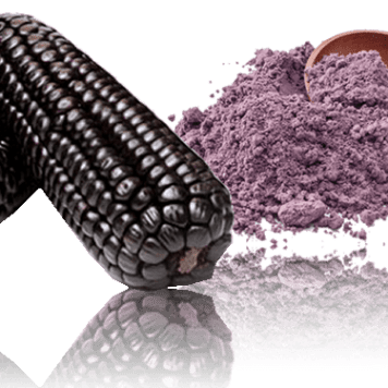 Maiz morado purple corn