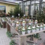Weihnachtsausstellung Blumen-Gärtnerei Müller Sarnen