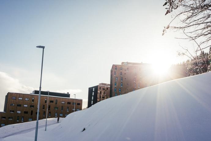 Norges arktiske studentsamskipnad