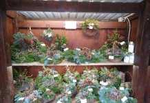 Vejbod med kranse og dekorationer