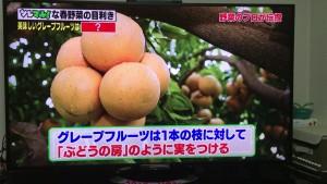 グレープフルーツのなりかた