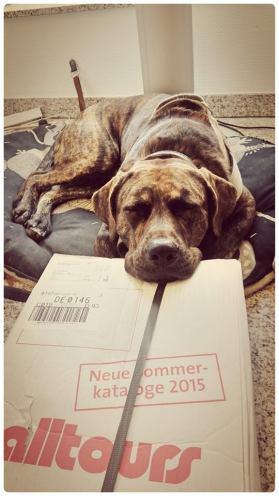 Kenny (C): P. Timte, Quelle: Bundesverband Bürohund