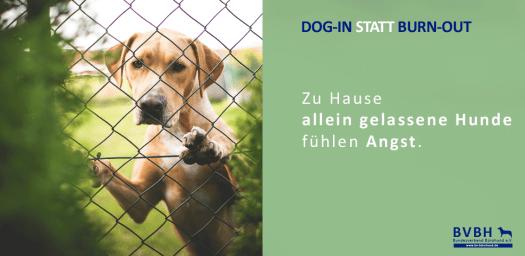 Infocard: Hunde-allein-gelassen