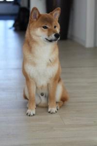 Bürohund pets Premium: Puma Bürohund bei pets Premium