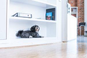 Foto Bundesverband Bürohund e.V. (C) Steffi Greuel. Quelle: Bundesverband Bürohund e.V.
