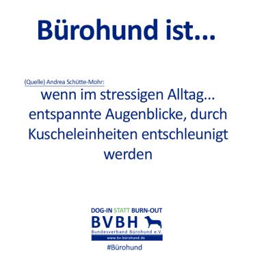 B-Hund_ist_Mohr