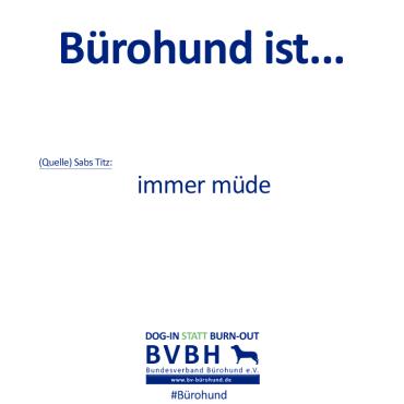 B-Hund_ist_Titz