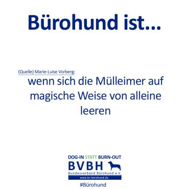 B-Hund_ist_Vorberg