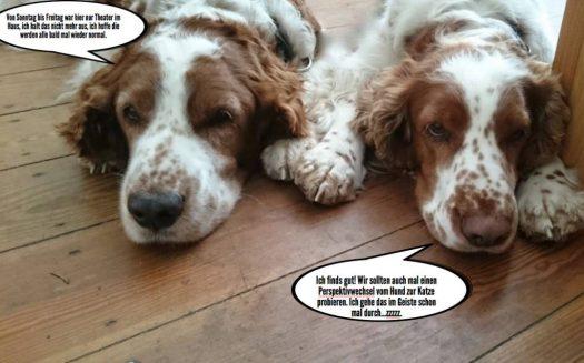 Welthundetag 2016 - Bürohund Robin und Marian