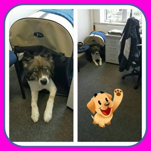 Welthundetag 2016 - Bürohund Ernie