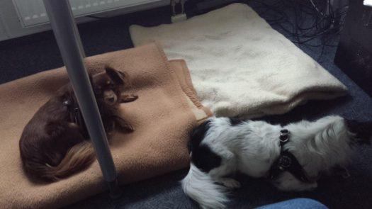 Welthundetag 2016 - Bürohund Bobby und Lizzy