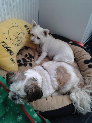 Welthundetag 2016 - Bürohund Pepper und Quincy
