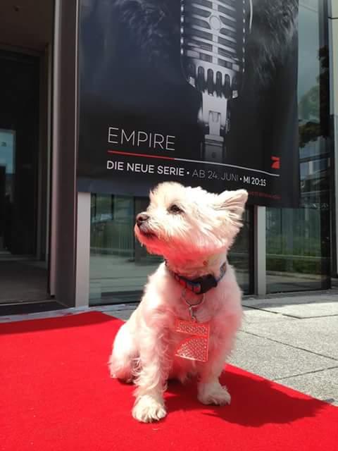 Welthundetag 2016 - Bürohund Pepper