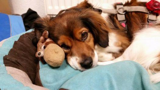 Welthundetag 2016 - Bürohund Gary