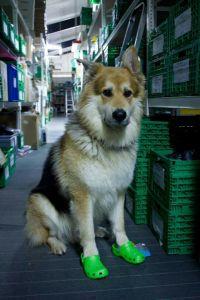 Bürohund Renner XXL