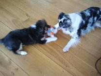 Bürohund Bondi und Emma bei der Lurse AG