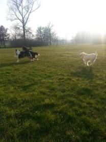 Mittagspause mit Bürohund  bei der Lurse AG