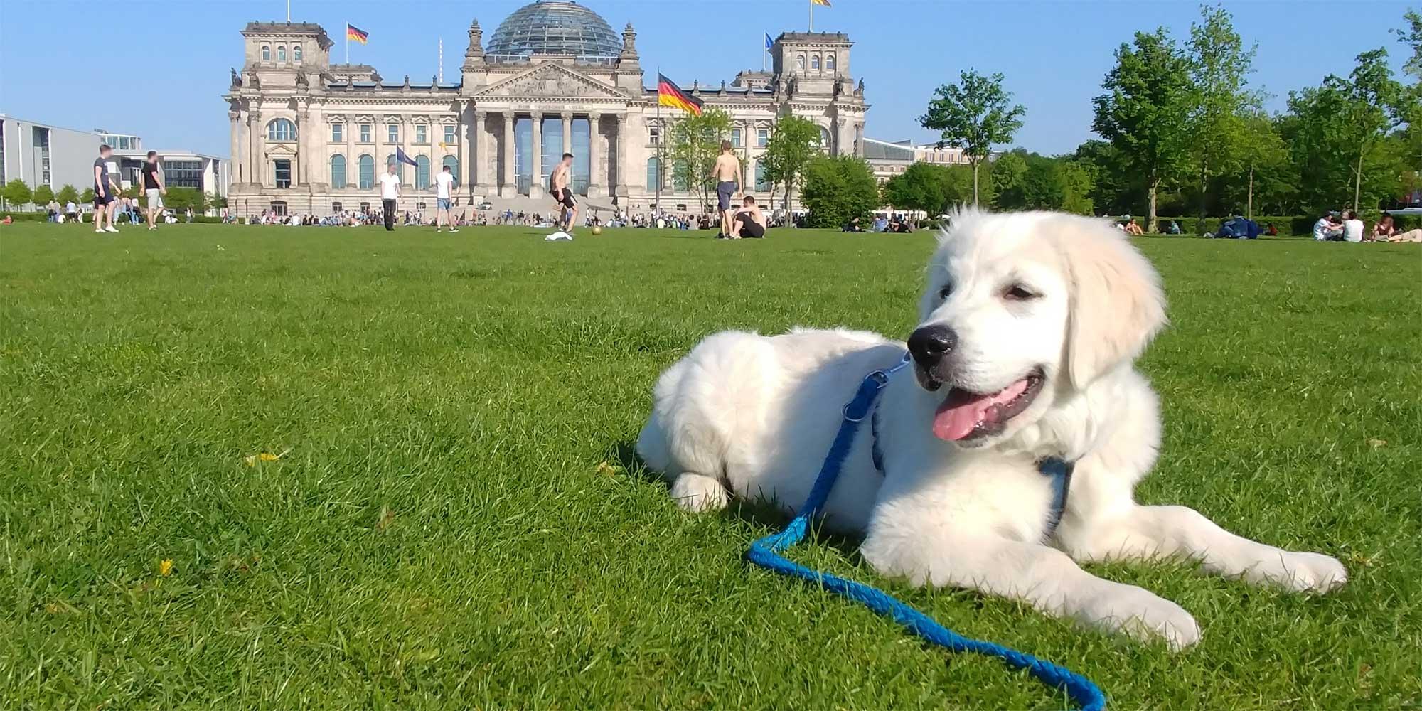 Bürohund Nando vor dem Reichstag