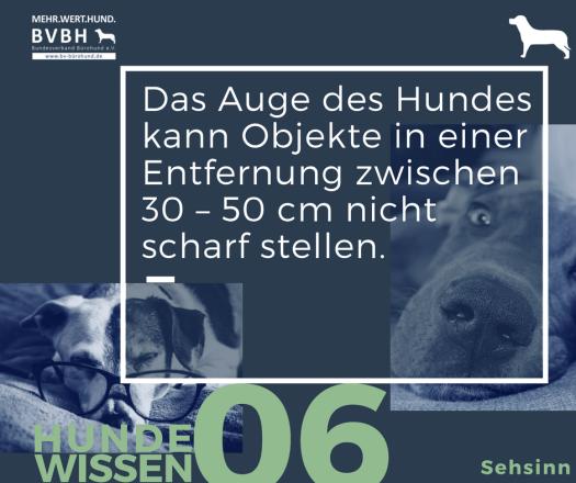 Hundewissen Bürohund: Das Auge des Hundes kann Objekte in einer Entfernung zwischen 30 – 50 cm nicht scharf stellen.