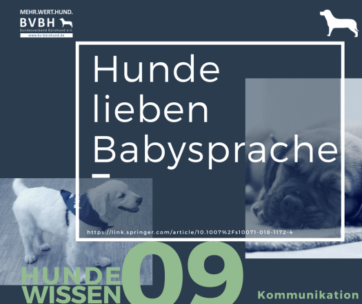 Bürohund: Hunde lieben Babysprache